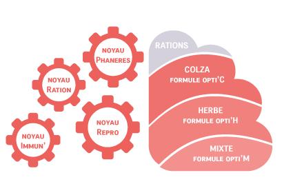 schema-4-noyaux