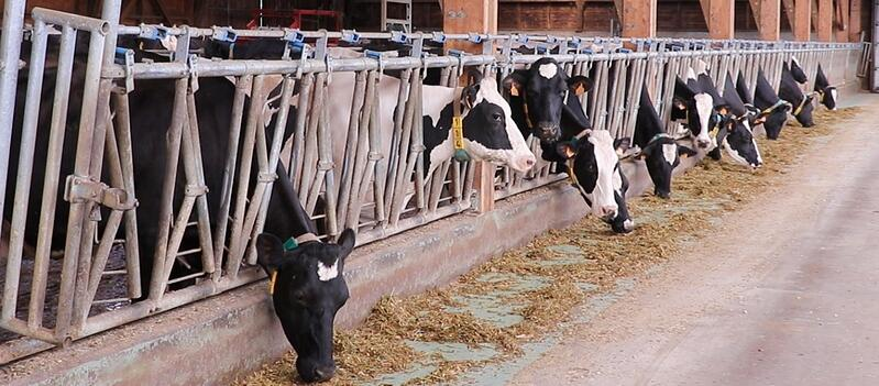 stress thermique vache xr repro reproduction primholstein montbeliard 2